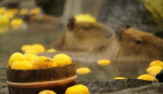 ゆず湯のやり方、作り方は?もたらす3つの驚くべき効果とは?
