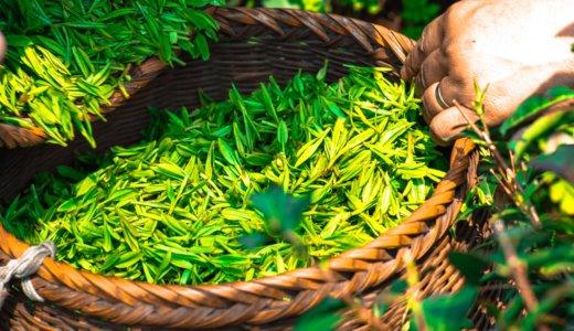 茶葉の賞味期限は?賞味期限が切れた場合の効果的な3つの活用法