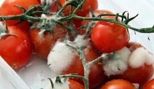 トマトのカビは取り除けば大丈夫?見分け方と安全に食べる方法