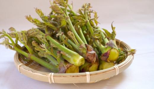 たらの芽のとげの処理方法について、美味しく食べるための4つのコツ