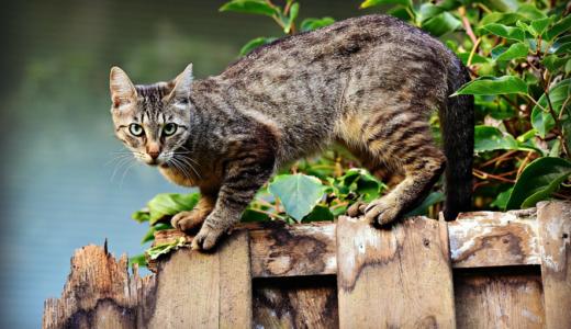 野良猫にひっかかれた時の対処方法  感染する可能性のある病気も解説