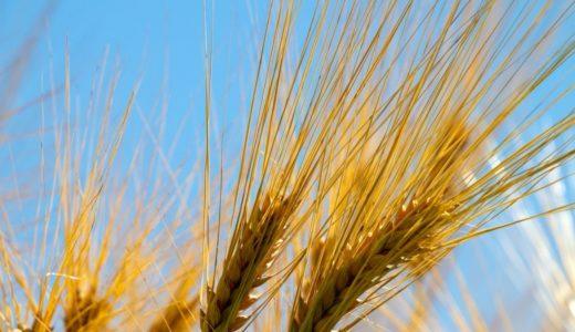 麦ご飯のデメリット・メリット | 絶対に失敗しない効果的な食べ方