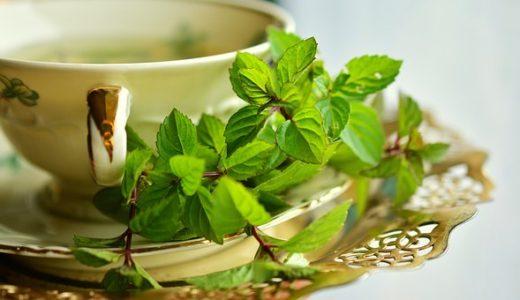 ハッカとミントの違い | 香り、健康効果、値段の違いについて解説