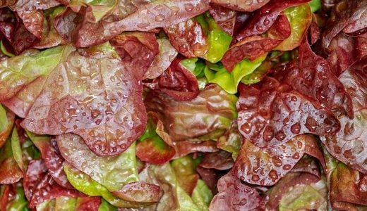レタスは赤く変色しても食べられる?赤い理由と対処の仕方