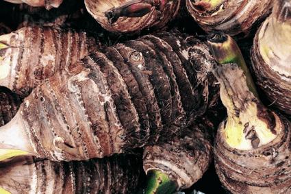 里芋が緑やピンク、茶色に変色する原因は?対処法や注意点について