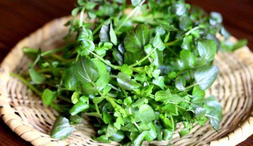 クレソンはどんな味の野菜?健康効果や美味しいレシピも紹介