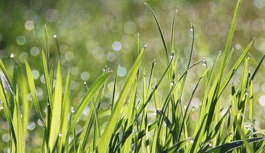 草むしりのコツと手順 | 効率のいいやり方やベストな時期・時間帯